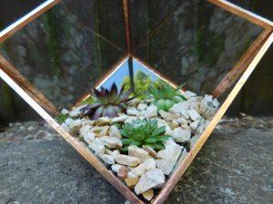 hacer terrario de cristal paso a paso