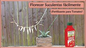 como hacer que florezcan las plantas suculentas